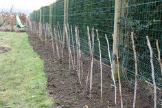 Taille d'hiver des framboisiers, photo: jardin-obigies.blogs.lalibre.be