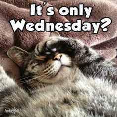 Weekend Quotes : It's only Wednesday - Quotes Sayings Funny Hump Day Memes, Funny Wednesday Quotes, Wednesday Morning Quotes, Hump Day Quotes, Wednesday Hump Day, Hump Day Humor, Wednesday Humor, Morning Humor, Funny Quotes