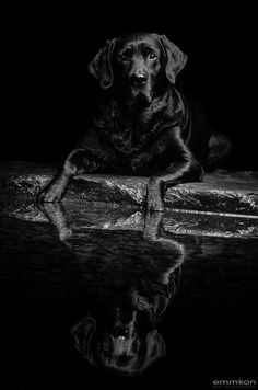monochromacity The Black Lab' by Kosta Emmkon