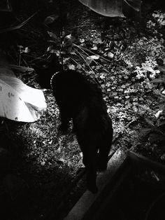 … la gata negra …víctor m. alonso