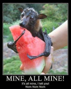 I love animals. All kinds. While they're quite strange looking, bats are still quite cute.