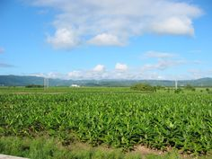 Valle de Yabucoa, PR.