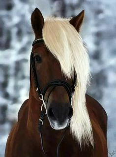 The post Chestnut horse cross stitch pattern, horse cross stitch, brown horse cross stitch, animal cross stitch, blonde horse cross stitch appeared first on Bestes Soziales Teilen. Cute Horses, Horse Love, Beautiful Horses, Animals Beautiful, Funny Horses, All The Pretty Horses, Beautiful Beautiful, Dead Gorgeous, Hello Gorgeous