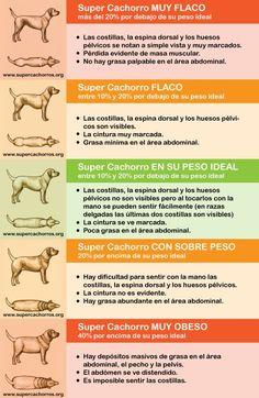 150 Ideas De P E T S En 2021 Mascotas Perros Consejos Para Mascotas