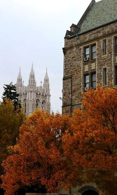 Fall trees. Boston College, Massachusetts, U.S.