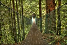 Juan de Fuca Trail: Suspension Bridge puzzle in Bridges jigsaw puzzles on TheJigsawPuzzles.com. Play full screen, enjoy Puzzle of the Day and thousands more.