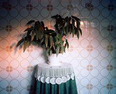 Floral tiles plant doily