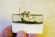 """Wildlife Miniaturist Beth Freeman-Kane creates """"A World in the Palm Of Her Hand"""" with her impeccably detailed miniatures including many South African birds."""