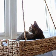 Image result for cat climber diy