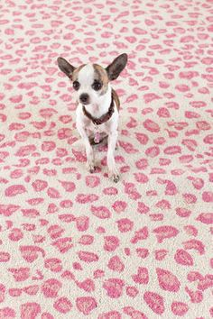 Fab Pink Leopard Print Rug From Dash Albert