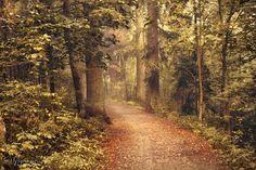 Last Autumn by Pajunen.deviantart.com on @DeviantArt