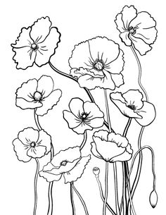 Poppy Flower Coloring Pages Poppy Coloring Page, Flower Coloring Pages, Colouring Pages, Coloring Books, Free Coloring, Watercolor Flowers, Watercolor Art, Poppy Drawing, Stained Glass Patterns