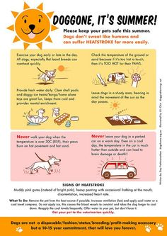 Doggone, It's Summer!  Take care of your dog in the hot weather.