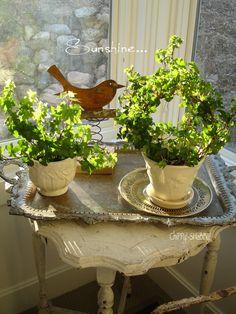Green Plants... Birdie... Sunshine