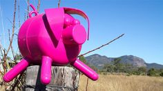 """Biggenden is pretty in pink. The town, which sits in a rich agricultural area in Queensland, has recently adopted pink pigs as its unofficial mascot. This one sits on a fence post. A larger version has been constructed to join Australia's list of """"The Big..."""" Scrap-metal artist Craig Nelson can take credit for the swine-splosion. (Image: ABC Wide Bay/Brad Marsellos)"""