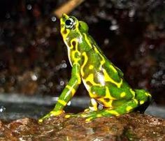 that's a pretty frog :)
