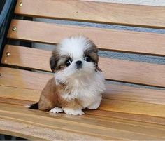 Silly Dogs, Cute Baby Dogs, Cute Little Puppies, Cute Dogs And Puppies, Cute Little Animals, Puppies For Sale, Baby Animals, Teacup Animals, Dog Breeders Near Me