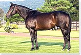 Boston Harbor(1994)Capote- Harbor Springs By Vice Regent. 4x5 To Nasrullah, 5x5 To Nearco. 8 Starts 6 Wins 1 Second. $1,934,605. Won 1996 BC Juvenile(G1), Breeder's Futurity(G2). Sold To Japan For Breeding.