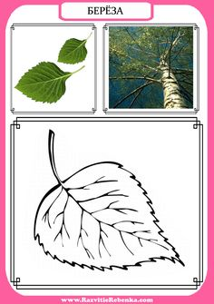 Montessori Materials, Cvc Words, Math For Kids, Pencil Art, Fine Motor, Teaching Kids, Plant Leaves, National Parks, Tapestry