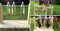 Como hacer un comedero-juguete para perros con botellas de plástico