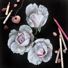 Иллюстрация цветными карандашами на черной бумаге Colored pencils illustration on black paper ботаническая иллюстрация Botanical illustration розы roses