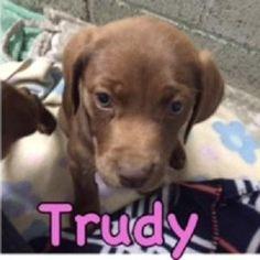 TRUDY - Dallas