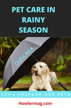 #CostaRica #puravida #Costaricatravel #costaricatravelblog #costaricatraveltips #costarica2020 #visitcostarica #centralamerica Living In Costa Rica, Travel Blog, Costa Rica Travel, Rainy Season, Central America, Pet Care, Animal Rescue, Your Pet, Insects
