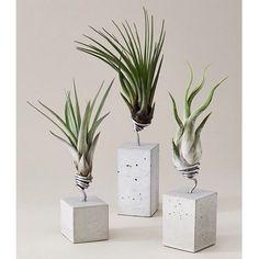 Wohn Deko Elemente aus Beton mit Luftpflanzen
