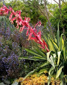 Specializing in rare and unusual annual and perennial plants, including cottage garden heirlooms and hard to find California native wildflowers. Colorful Flowers, Wild Flowers, California Garden, Front Steps, House On A Hill, Types Of Plants, Tropical Garden, Drought Tolerant, Water Garden