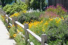 California native plant garden.