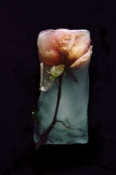 Another example of a frozen flower. Frozen rose. Might be cool to have 2 flowers in the same block of ice...