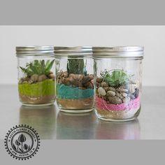 Mason Jar Succulents_1.jpg