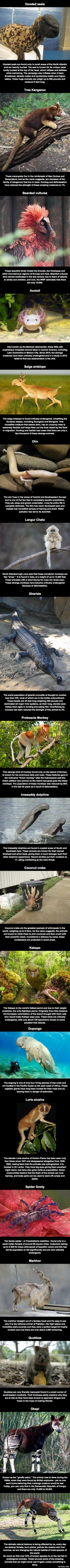 20 animals that you probably don't know exist, that are likely to become extinct before you die