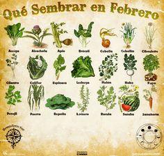 Les traemos este útil calendario de las Siembras del mes de Febrero, además de fichas con información específica de cada planta que podr...