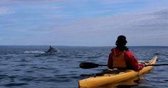 Les Baleines du St-Laurent, demi-journée