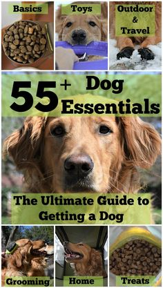 If you are thinking of getting a dog, check out the @MyDogLikes guide of essential pet products! We've shared our favorite tried and true products to equip you with all the essentials when adopting a dog!: