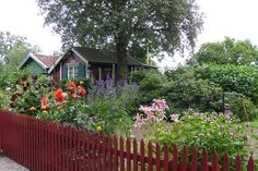swedish-red picket fences