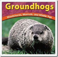 Book, Groundhogs     - Re-pinned by @PediaStaff – Please Visit http://ht.ly/63sNt for all our pediatric therapy pins
