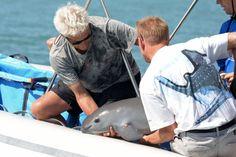 Un marsouin du Pacifique, espèce en grand danger, meurt en captivité// La Presse