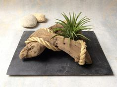 Objet décoratif en bois flotté agrémenté d'un Tillandsia par l'Atelier de Corinne : Accessoires de maison par atelier-de-corinne