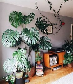 28 diy plant stand ideas to fill your living room with greenery 8 . - 28 diy plant stand ideas to fill your living room with greenery 8 - Low Maintenance Indoor Plants, Plantas Indoor, Decoration Plante, Monstera Deliciosa, House Plants Decor, Plants For Home, Easy House Plants, Inside Plants, Container Gardening