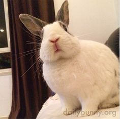"""dailybunny:  Excuse Me, What Do You Mean by """"That's Enough Treats""""? Thanks,Bun E. Rabbit!"""