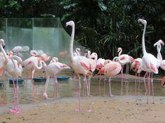 Parque de los pájaros - Foz do Iguazú