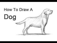 Köpek Nasıl Çizilir?