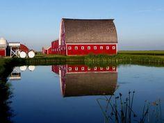 Lone Star Farms