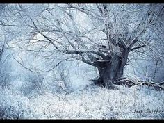 Just like a tree from a fairy tale in a winter scene. For more photos visit my website: Joop Snijder Photography Winter Trees, Winter Snow, Winter Scenery, I Love Winter, Winter Picture, Winter Colors, Winter Magic, Snow Scenes, Nature Tree