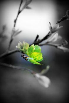 colorsplash.quenalbertini: Spring's First Breath
