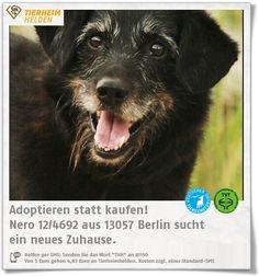 Hundeopa Nero sucht im Tierheim Berlin eine Endbleibe.  http://www.tierheimhelden.de/hund/tierheim-berlin/schnauzer_mix/nero_124692/10330-0/  Nero bleibt gut alleine, fährt Auto und ist stubenrein. Bis er richtig aufgetaut ist, dauert er eine Weile, wobei er bei Frauen schneller Bindung aufbaut. Der ältere Herr sucht einen Gnadenplatz ohne Kinder. Andere Hunde kennt er.