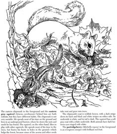dover coloring book a walk in the woods - Google Search