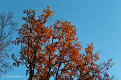Herrlich, dieses klare, kalte Winterwetter! Schnell mit der Kamera noch mal aus dem Haus zum Aaper Wald am Waldstadion vorbei hoch zum Kriegerdenkmal mit Blick auf die St. Josef Kirche in Oberrath,…